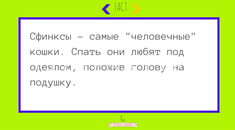Sphynx_cat_3