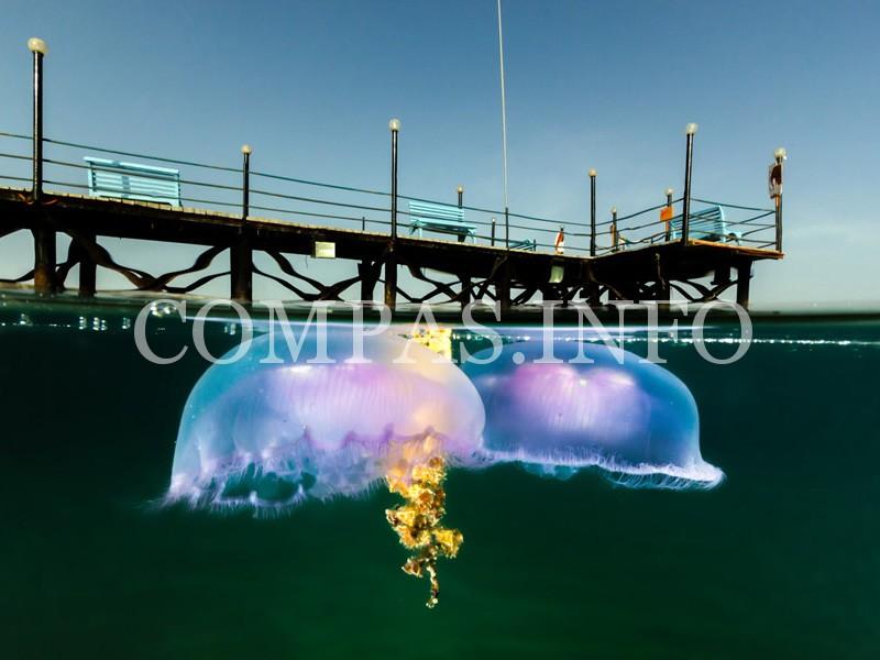 10-необычных-подводных-фото-8