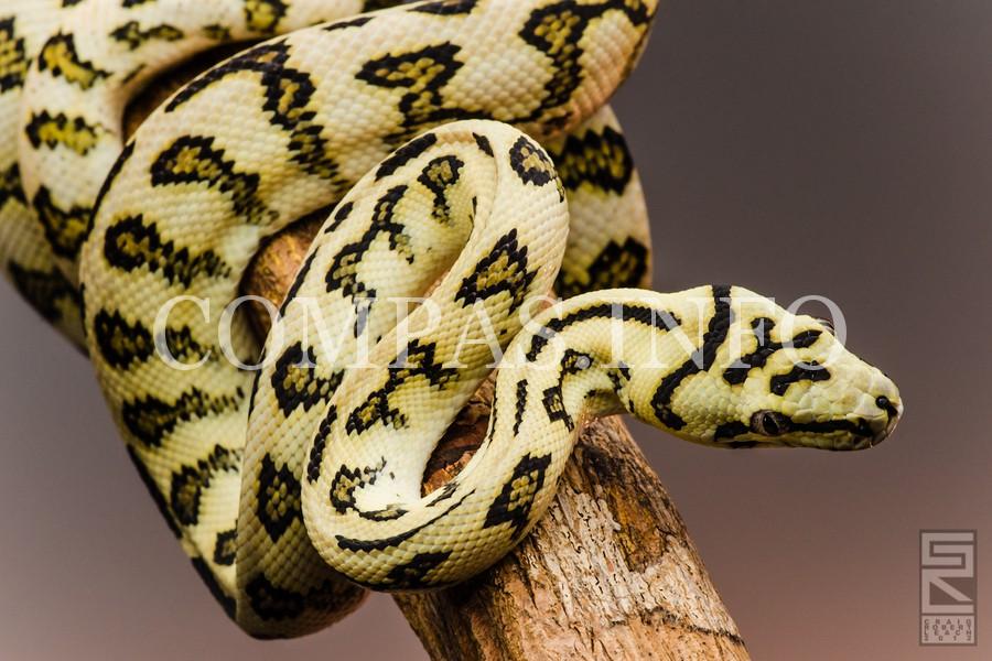 Python11