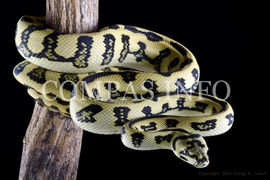 Python14