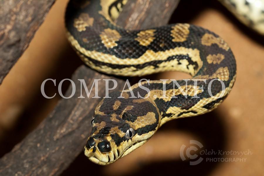 Python15