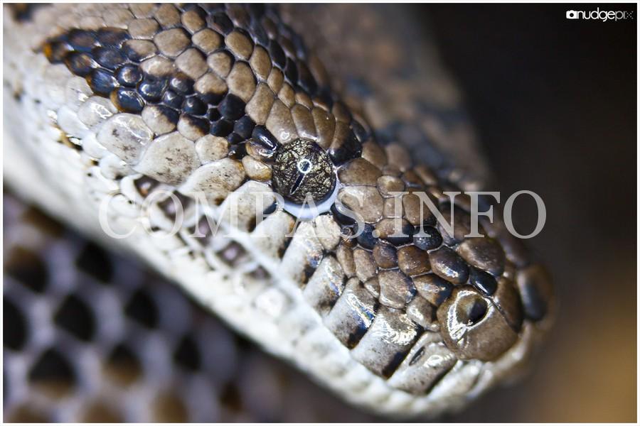Python17