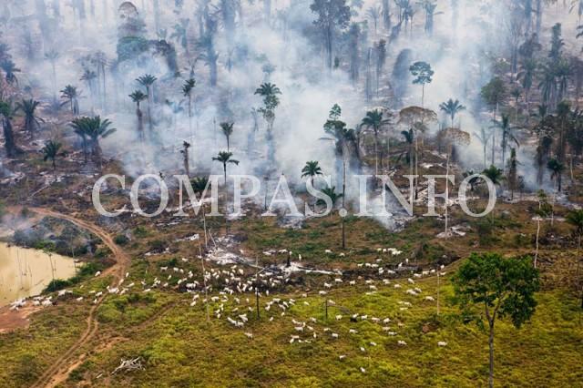Бразилия. Часть джунглей Амазонки, сожженных в целях «переориентации земель».