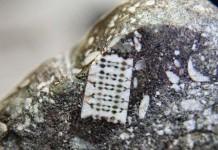 Микрочип возрастом 250 млн. лет, Россия