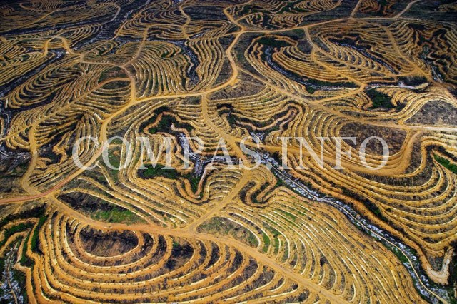 Индонезия. Лес превращается в пальмовые плантации.