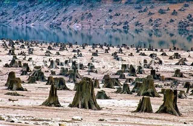 США, штат Орегон. Государственный лес Уилламетт: вырублено 99% лесного покрова.