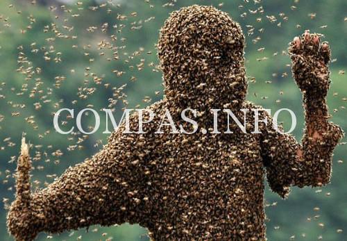 человек и пчелы