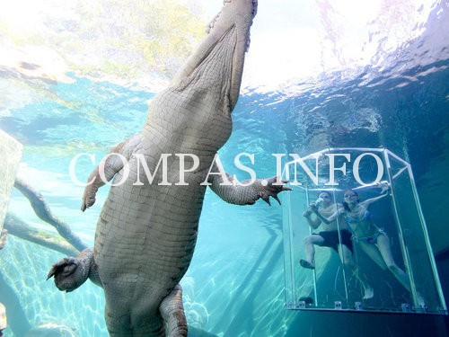 Crocosaurus_Cove-20000000005463209-500x375