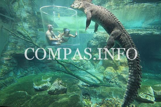 croc-cove-full