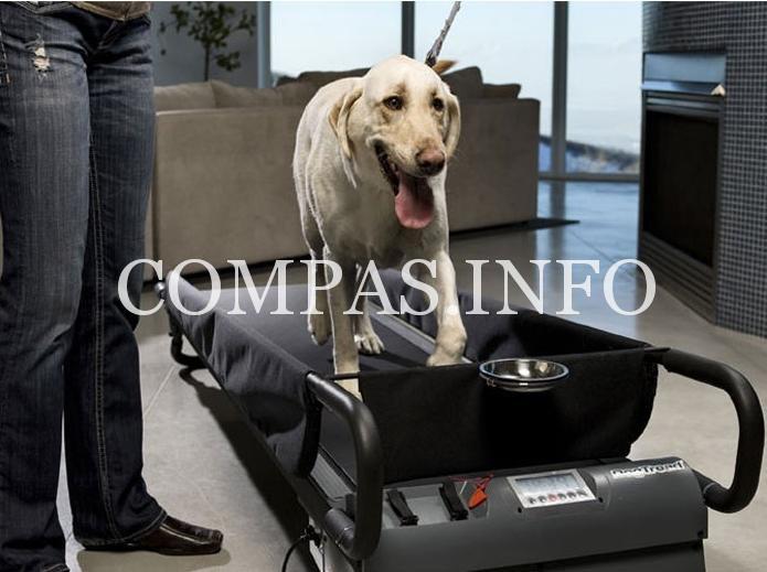 Гаджеты для домашних животных8