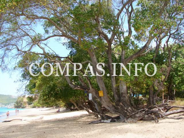 Интересные факты о деревьях10
