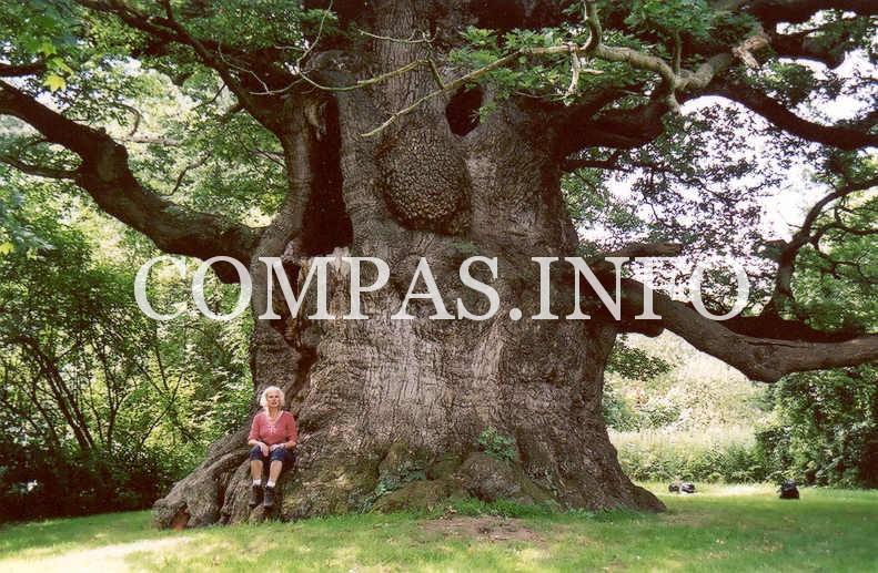 Интересные факты о деревьях2