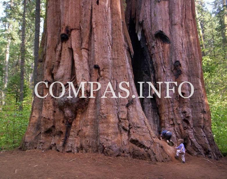 Интересные факты о деревьях3