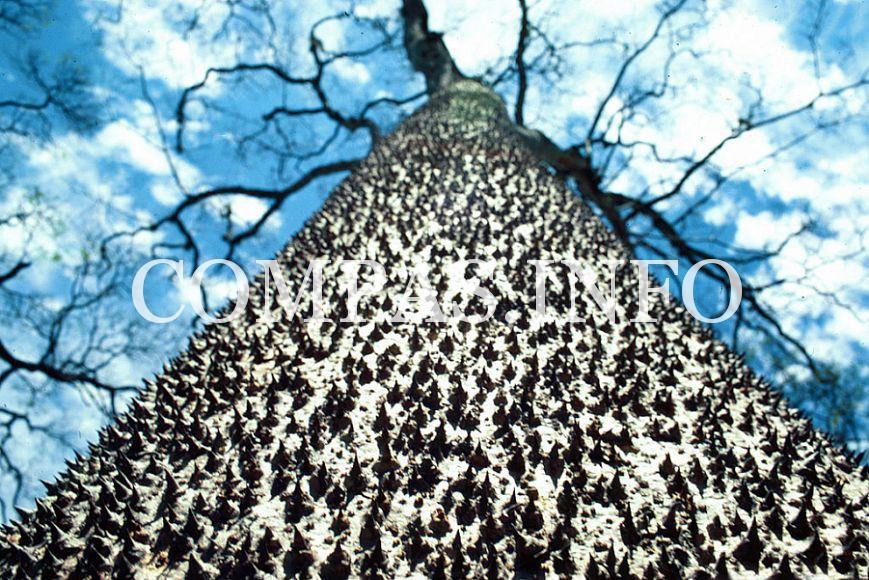 Интересные факты о деревьях7