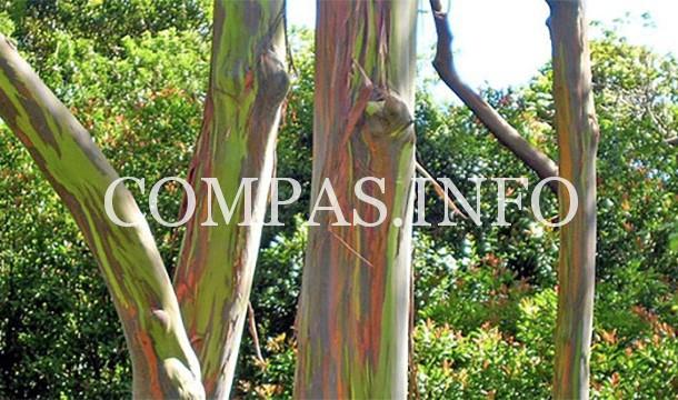 Интересные факты о деревьях9