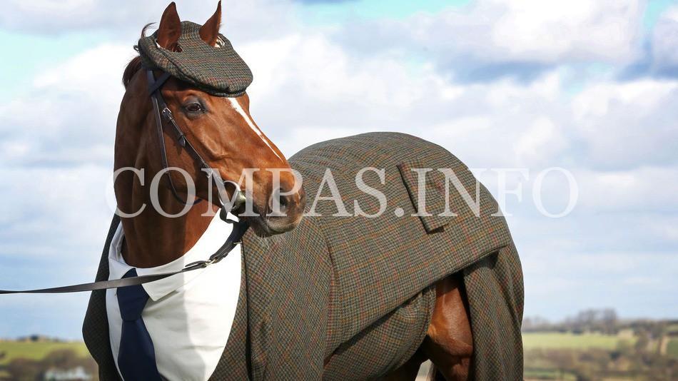 horse-lead1