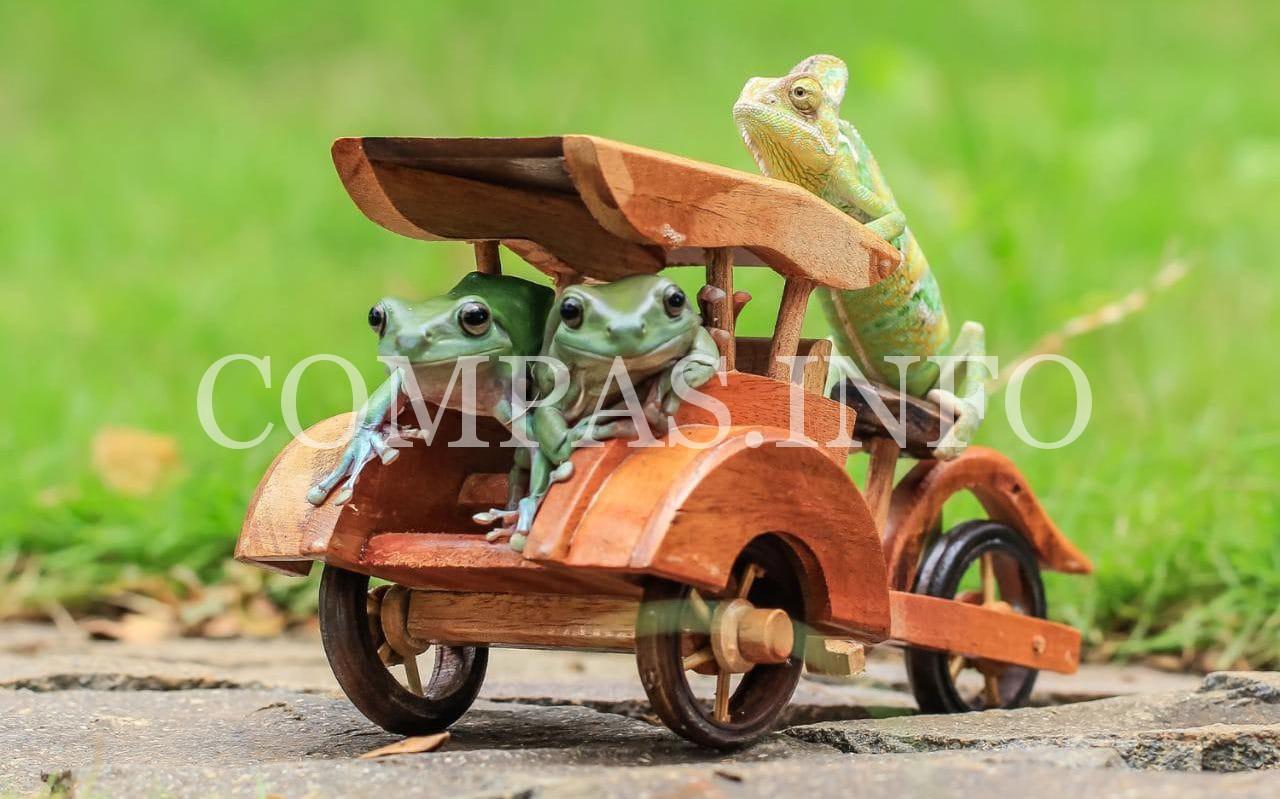 104748769_frogs-news-xlarge_transeo_i_u9apj8ruoebjoaht0k9u7hhrjvuo-zlengruma