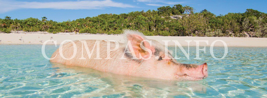 swimming_pigs_header_920_v3