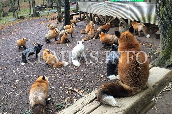 foxvillage_japan_03